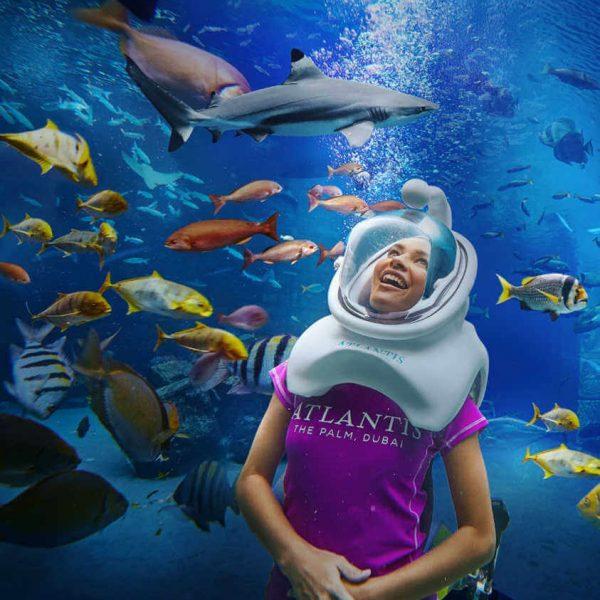 Lost Chambers Aquarium (6)